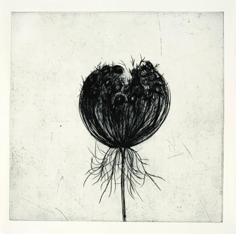 Sem título (Flor de Cenoura)
